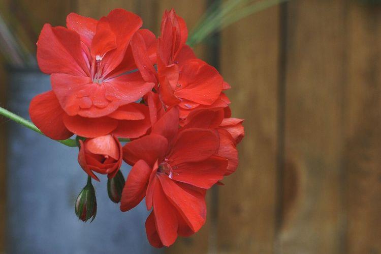 Red Flower Sammer 2015 Bright 😚