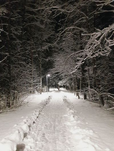 Snow Cold Temperature Winter Nature Outdoors Snowing Tree Beauty In Nature No People Nature_perfection Winter Wonderland
