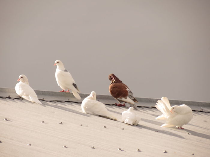 Birds perching on white wall