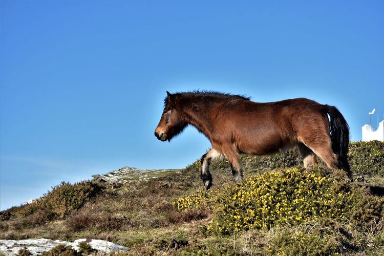 Side view of horse on field against sky