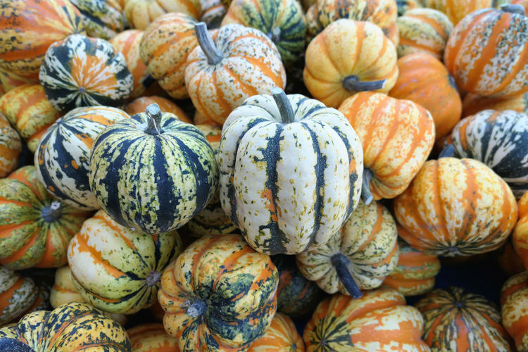 Group of orange green white small decorative pumpkins Pumpkins. Full frame natural harvest background Decorative Pumpkins Pumpkins Zierkürbisse Backgrounds Food Food And Drink Freshness Full Frame Healthy Eating High Angle View Kürbis Large Group Of Objects Market Market Stall Minikürbis Pumpkin Small Pumpkins Vegetable