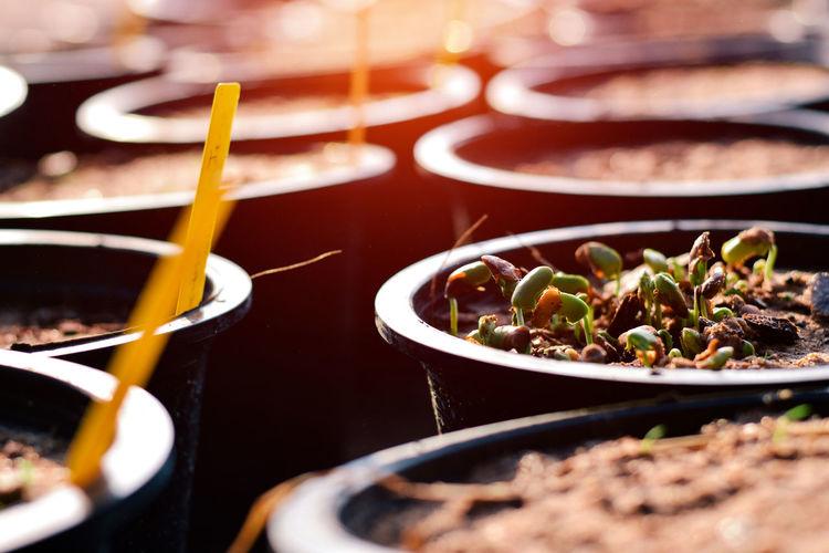 Seed Pot Soil