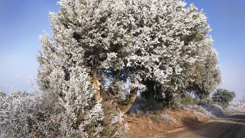 helada Winter Invierno Paisaje Carretera árbol Arboles Helada Helado Frozen Iced Sky Day Tree Close-up Growth Nature Outdoors Clear Sky Beauty In Nature No People Freshness Tranquility Scenics Shades Of Winter