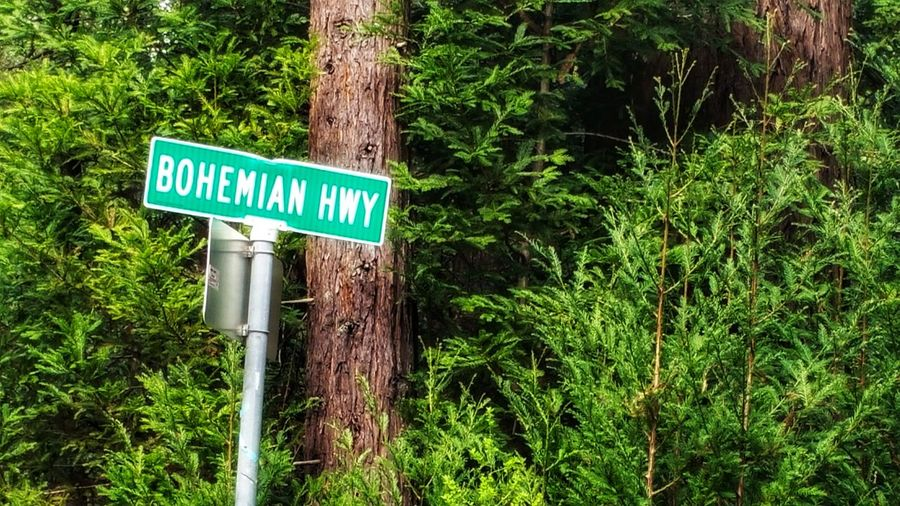 Bohemian Hwy Bohemian Bohemian Hwy Highway Green Road Sign Marker Redwood Trees Rural Country Zen Distance Peace Rewilding Copy Space Interesting Directional Directions Tilted Ethnic Tree Road Sign Communication Guidance Street Name Sign Text Tree Trunk Signboard Capital Letter Western Script Information Directional Sign Information Sign