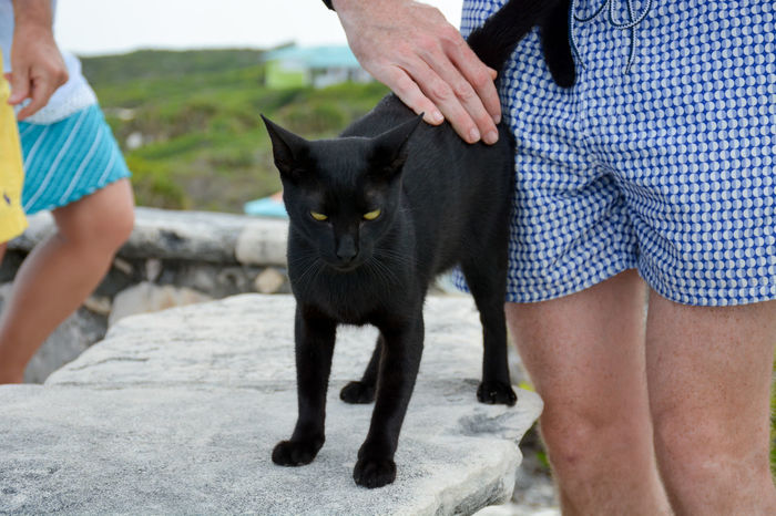 Island kitty on Middle Caicos Turks And Caicos Turks And Caicos Islands Adult Care Cat Domestic Domestic Animals Domestic Cat Feline Mammal Men Middle Caicos Midsection One Animal People Pet Owner Pets Real People Standing Turks And Caicos Beach Vertebrate Women