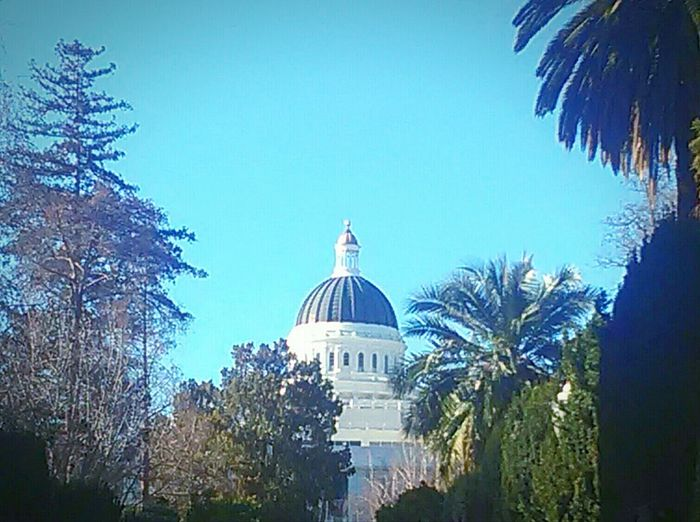 Taking Photos My Photography My Point Of View This Week On Eyeem State Capital California State Capitol Government Building Tourist Attraction  Politics Sacramento Trees And Sky