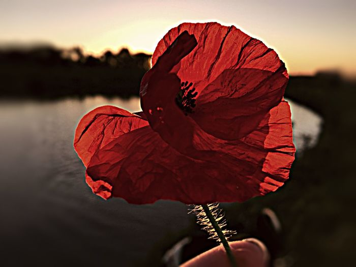 Never Forget Remember Remembrance Poppy Sunset