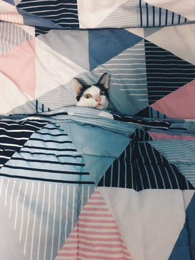 Close-up portrait of cat sleeping in bed