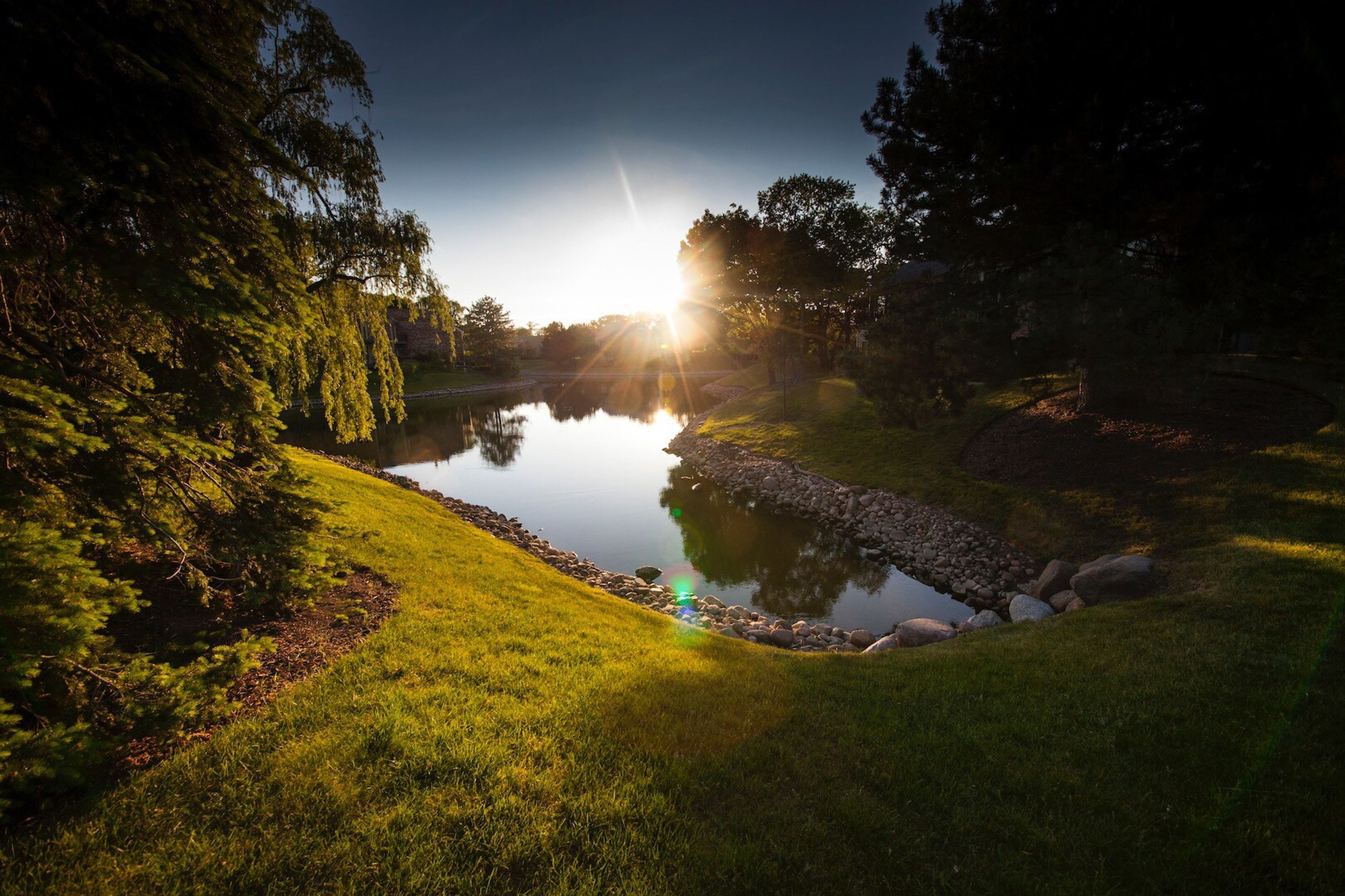 tree, water, sun, sunlight, tranquility, sunbeam, reflection, growth, tranquil scene, grass, nature, clear sky, green color, beauty in nature, lens flare, scenics, lake, river, sky, plant
