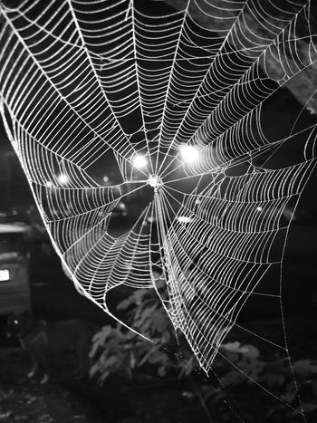 Spider Web Spider Web Outdoors Nature Close-up Nocturnal 🕸🕸🕸🕷