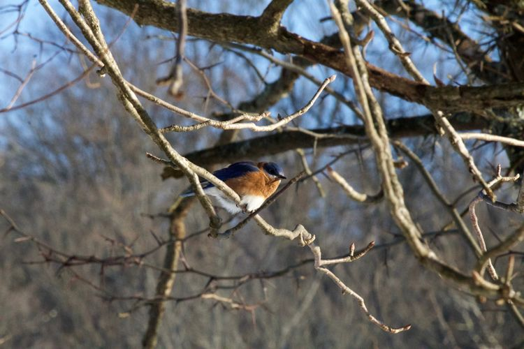 EyeEm Nature Lover EyeEmNewHere Animal Themes Animal Wildlife Animals In The Wild Bare Tree Beauty In Nature Bird Branch Close-up Day Nature No People One Animal Outdoors Perching Tree Winter