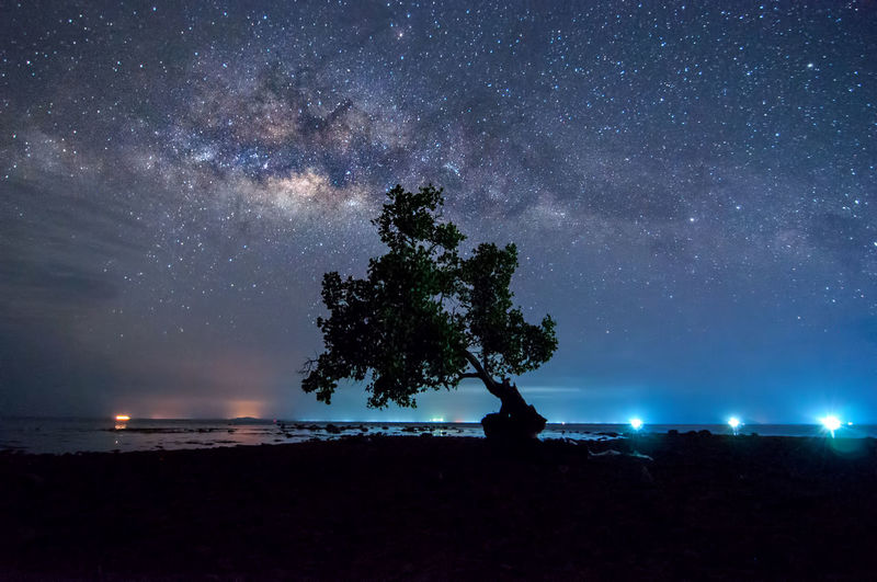 milky way rise above trees Night Star - Space Sky Astronomy Tree Space Scenics - Nature Galaxy Beauty In Nature Water Tranquility Plant Land Tranquil Scene Nature Milky Way Silhouette No People Sea Outdoors