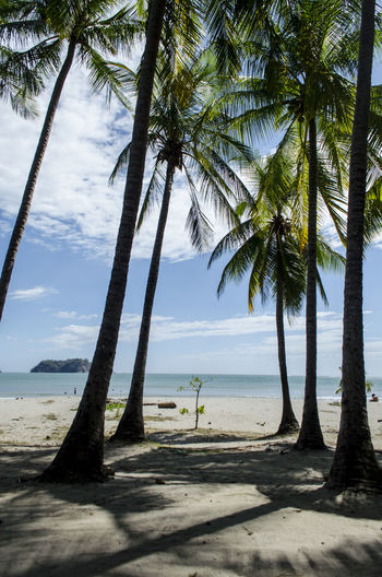 Tree Tropical