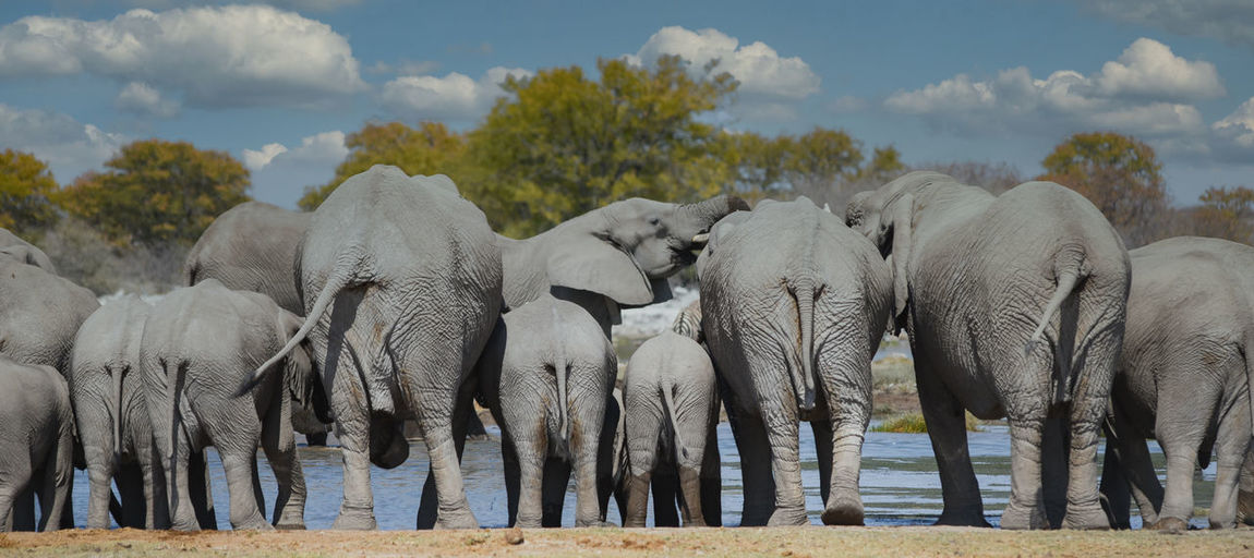 Panoramic view of elephant on field against sky