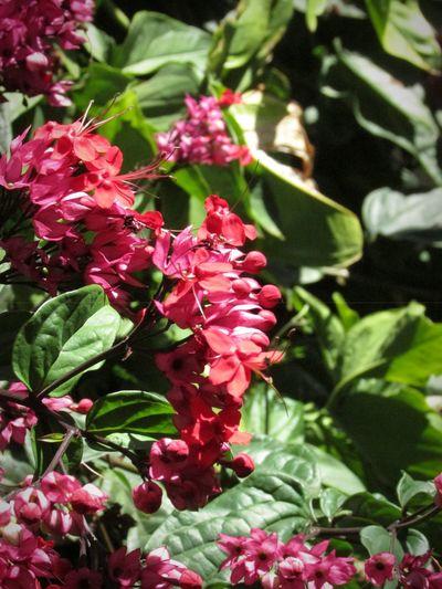 Flower Beautiful Red Flower Grenn Color