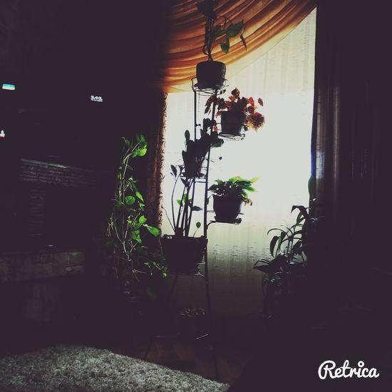 Sweet Home Relaxing Retrica✌ Window