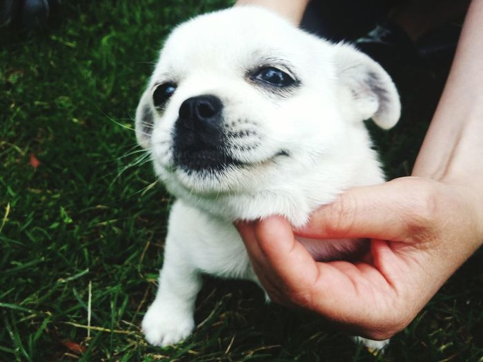 Cropped Hand Of Person Petting White Puppy