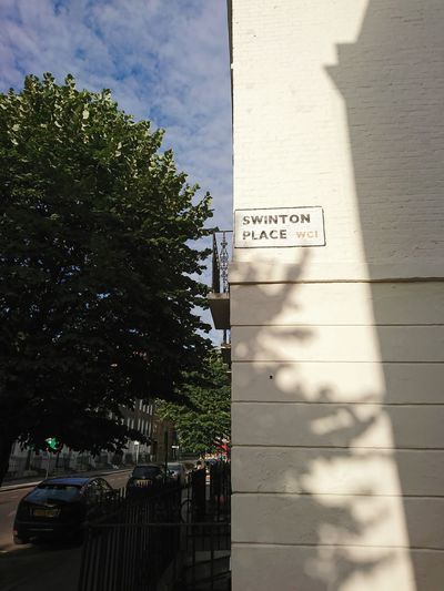 Road sign by tree in city