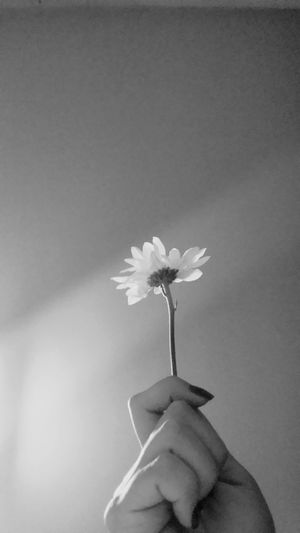 """""""If you only do what you can, you'll never be better then what you are..."""" - Máster Chifu - Kung Fu Panda Flower Flowers Margaridas Flor Flores Inspiring Conceitual Hana"""