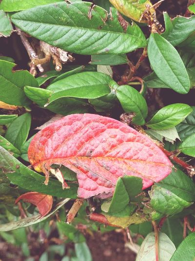 Leaf Green Color Growth Plant Nature No People Day Close-up Outdoors Change Beauty In Nature Fragility Freshness Photography Rural Scene Beauty In Nature Orange Color EyeEmNewHere