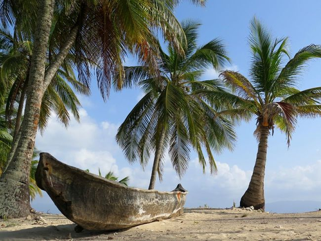 Relaxing Naturelovers Hugging A Tree Eye4photography  Beach Photography Palmtree Canoe Beachphotography EyeEm Nature Lover Travel Photography Traveling Island Island View  Travel Destinations Life Is A Beach Beauty In Nature Beach