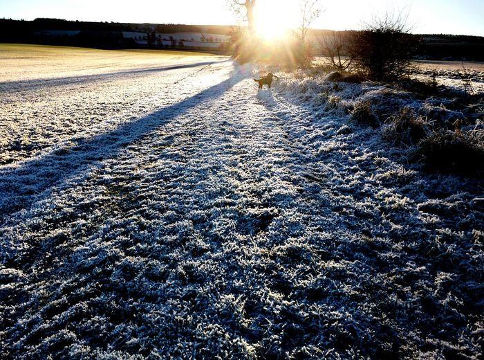 Dog Walking Beautiful Surroundings Landscapes Sunday Morning Frosty Mornings Cocker Spaniel  Perthshire Pet Photography  Scotland
