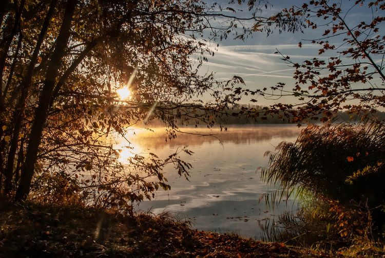 Sonnenaufgang am Baggersee EyeEmNewHere Autumn Herbst EyeEm Best Shots - Nature Nature Photography Naturelover❤ Naturelovers Sunrise Water Tree Sky Beauty In Nature Plant Sunset Scenics - Nature Tranquility Lake Reflection Tranquil Scene Nature No People Idyllic Sunlight Non-urban Scene Growth Cloud - Sky Sun Outdoors