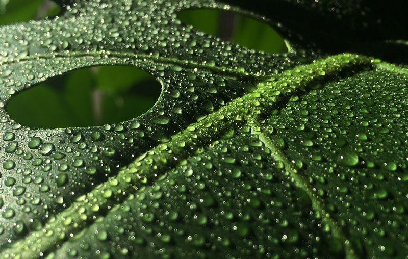 Macro shot of water drops on leaf