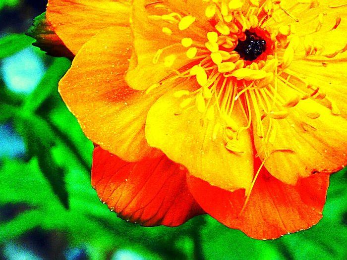 Flower Russia,