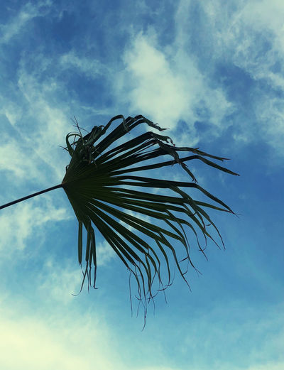 Low angle view of dead plant against blue sky