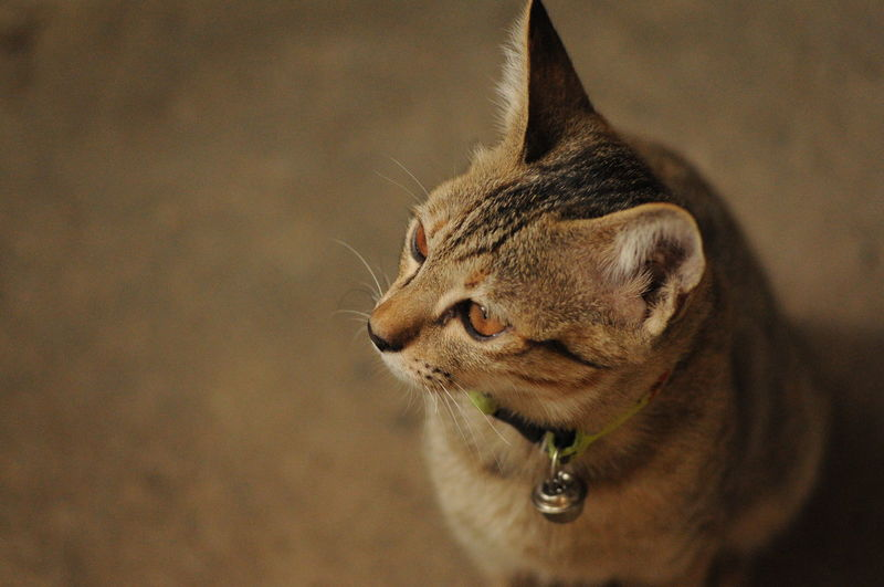 Cats are looking at something. Animal Animal Head  Animal Themes Cat Cats Watching Outside Domestic Cat One Animal Pets