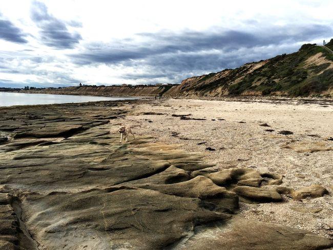Free run on the Beach Sea And Sky Landscape Labrador The Adventure Handbook I Love My Dog Miltonbiscuit