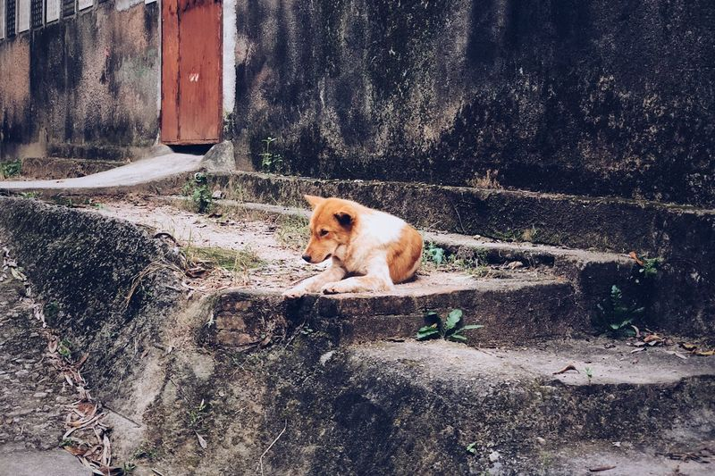 EyeEm Selects Mammal One Animal Animal Themes Pets Domestic Domestic Animals No People Vertebrate City Outdoors Nature Architecture Sunlight Animal Dog Canine Day Street Feline Looking