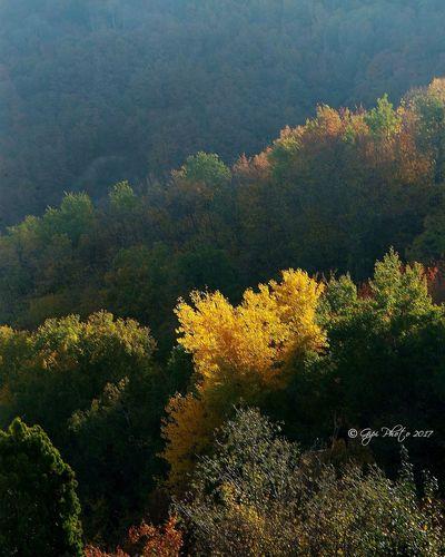 Nature Autumn Leaves Autumn🍁🍁🍁 Modena Montefiorino,Italy