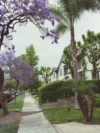 Neighborhood Map Tree Architecture Built Structure Building Exterior Growth Nature Outdoors Day Branch No People Beauty In Nature Flower Sky Walkway Grass Jacaranda Glendale California EyeEm Best Shots - Nature Nature Photography Nature_collection Beauty In Nature EyeEm Nature Lover Nature Neighborhood spotlight: Glendale, Los Angeles, California