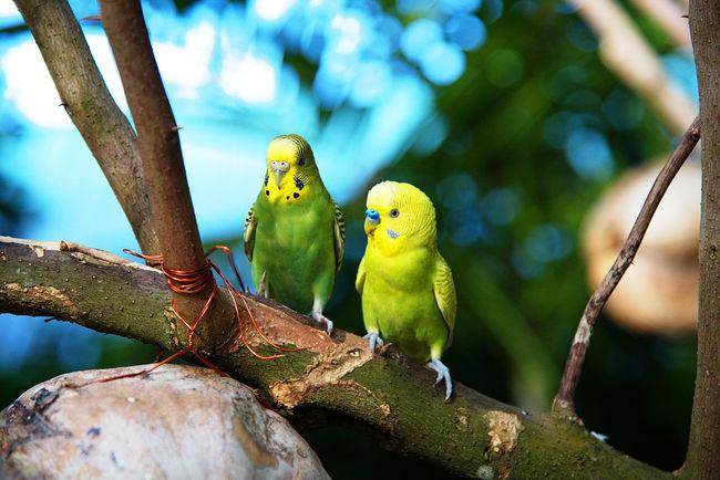 Birds Male Vogel