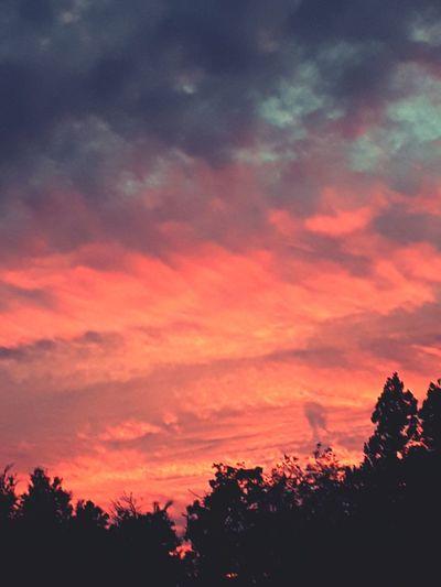 Sky Walker Davis, California EyeEmNewHere Tree Sunset Multi Colored Silhouette Astronomy Forest Awe Red Dramatic Sky Sky Atmospheric Mood Moody Sky