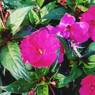 Flower Petal Growth Pink Color Beauty In Nature Plant Nature Leaf Flower Head Fragility Outdoors Day No People Freshness Close-up