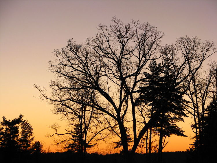 Beauty In Nature Nature No People Orange Sky Outdoors Purple Sky Scenics Silhouette Sky Sunrise Sunrise View Tranquility Tree