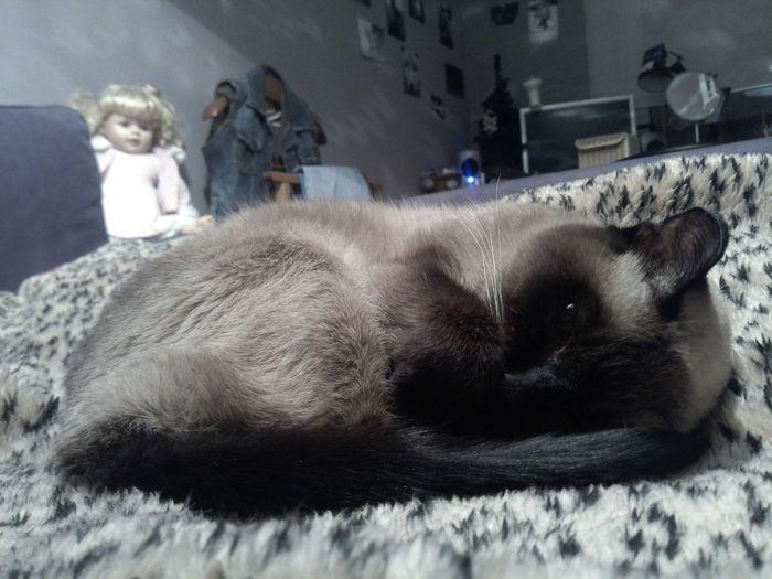 сладкая спит