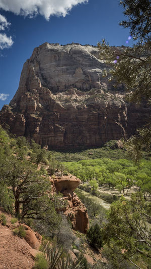 The View Rock Rock - Object Plant Solid Sky Rock Formation Nature Scenics - Nature Non-urban Scene Tree Beauty In Nature Mountain Physical Geography Geology Tranquil Scene No People Land Tranquility Environment Day Outdoors Formation Eroded Climate Arid Climate Zion National Park