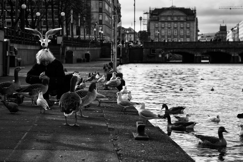 Animal Animal Themes Group Of Animals Water Bird Animal Wildlife Architecture Large Group Of Animals Vertebrate Animals In The Wild Built Structure Building Exterior City Nature Duck Day Flock Of Birds River Poultry Bridge - Man Made Structure Outdoors Seagull Blackandwhite Streetphotography 17.62° The Art Of Street Photography
