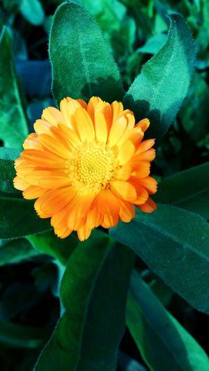 Flower Outdoors