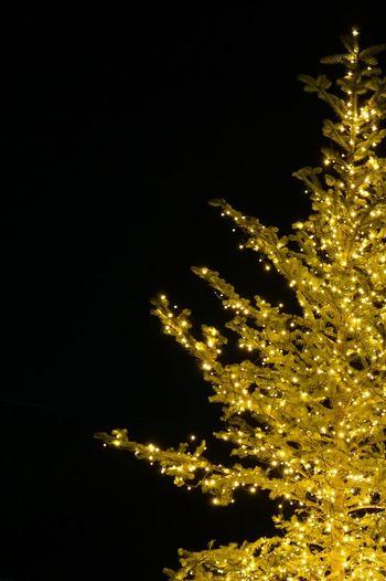 christmas tree Night Illuminated Sky Glowing Low Angle View No People Outdoors Light Nature Christmas Lights