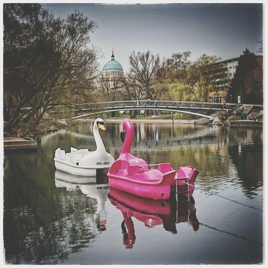 Gigantentreffen Tretboote Flamingoboat Swantastic PrettyInPink Cityview Potsdam Freundschaftsinsel Potsdam