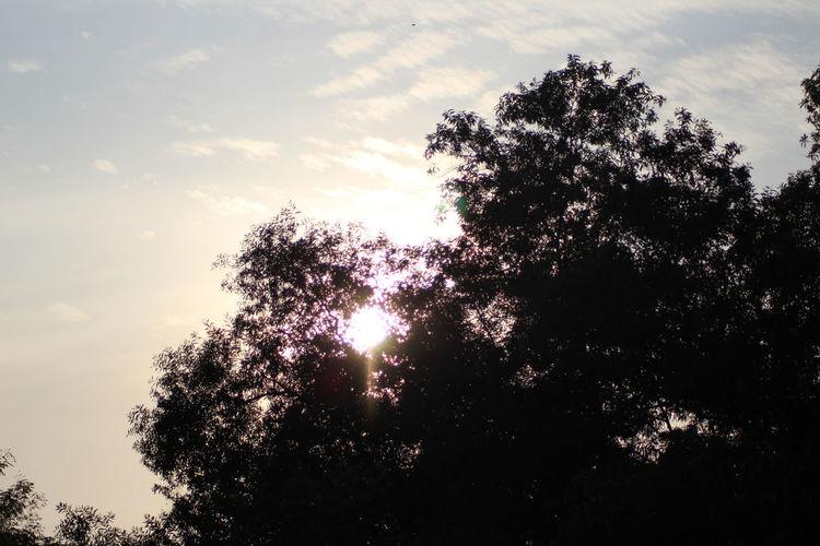 Calm Morning Morning Light Morning Sun Morning Sky Tree Sabah Sunrise