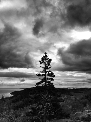 Arcadia National Park Sky Cloud - Sky Cloud Tree Sea Tranquil Scene Beauty In Nature No People Tranquility Nature Scenics Landscape Blackandwhite Black And White Clay Hayner Photo Art Art Is Everywhere Exploring Traveling Travel Photo Of The Day Travel Destinations Travelphotography ClayHaynerPhoto Photooftheday