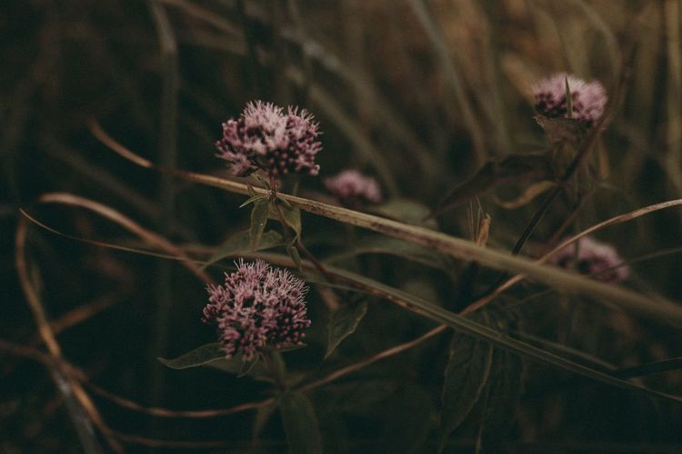 Flower Plant Nature Fragility Growth Flower Head Beauty In Nature Petal No People Day Outdoors Blooming Freshness Close-up Mood Latvia Beauty In Nature EyeEm Selects Growth Focus On Foreground