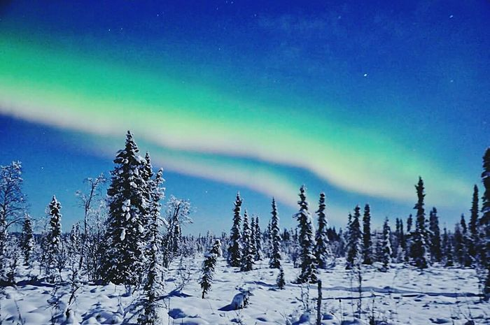 Aurora Auroras Dancing over Fairbanks