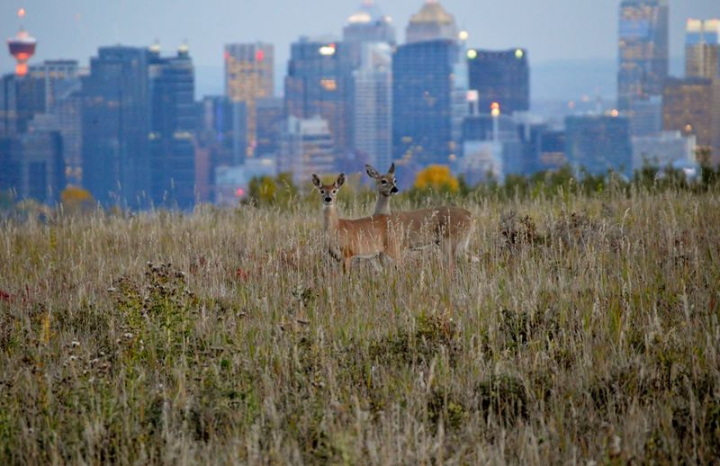 Deer on field against buildings in city